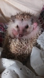 Hullo, world. It's me, hedgehog.