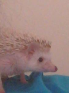 Hedgehog or Parrot?